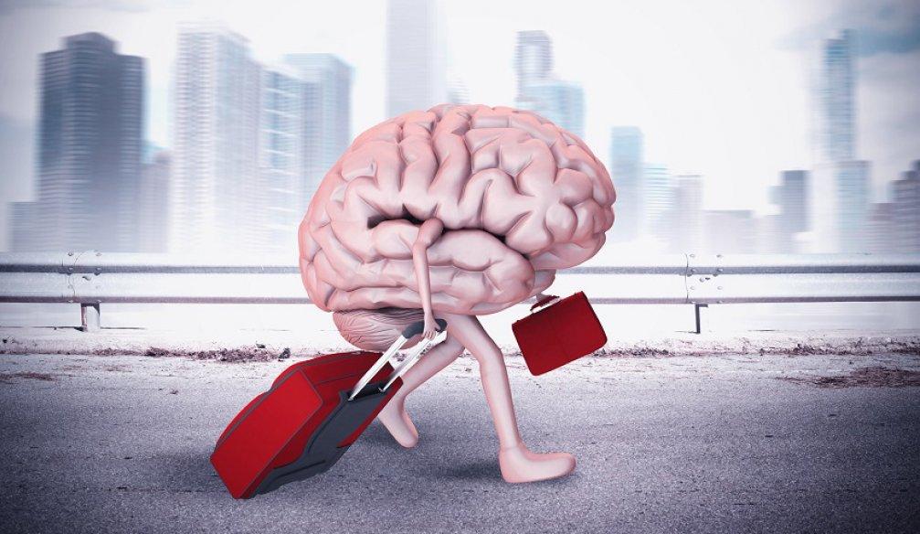 Страна без мозгов жить не сможет